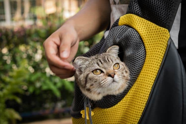 Pet Carrier with a Backpack is Fun for your Pet