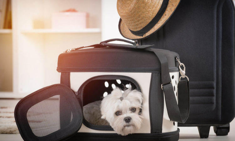 A Pet Carrier with a Backpack is Fun for your Pet
